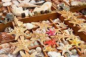 foto of flea  - Starfish and seashells for sale on El Rastro flea market in Madrid - JPG