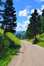 foto of blacktail  - Blacktail Plateau in Yellowstone National Park Wyoming in summer - JPG