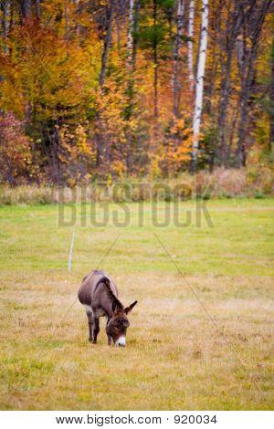 Donkey In Foliage