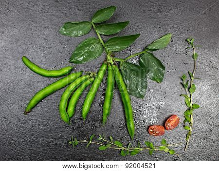 Broad Beans Over Slate Sheet