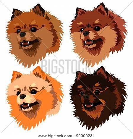 Illustrative Portrait Of Pomeranian Spitz Dog. 4 Colors: White, Peach, Brown And Yellow.