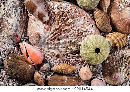 Mixed Sea Shells In Course Sea Sand.