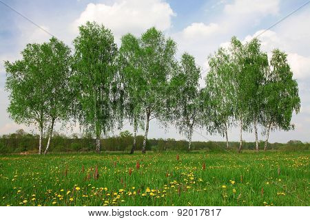 Field of spring grass, trees and cloudy sky