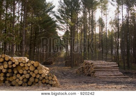 Logging Road And Stacks Of Logs