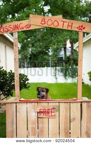 Boxer Sitting In A Kissing Booth
