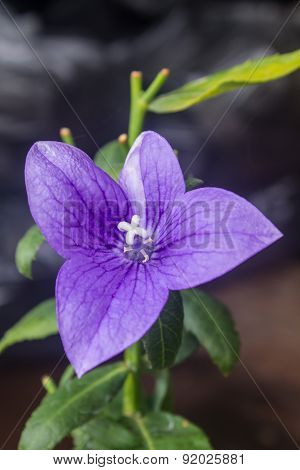 Closeup of purple flowers