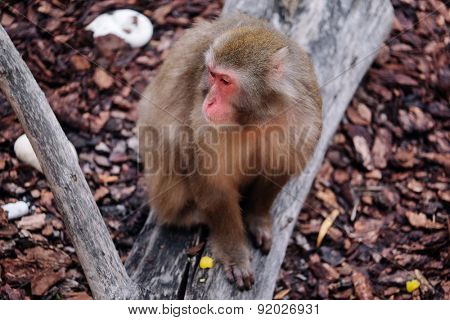 The image of a monkey