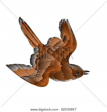 Bird Sparrow In Flight Vector
