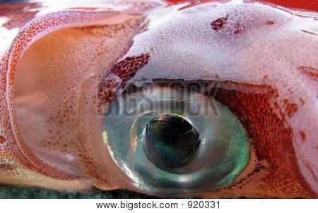 Squid Closeup