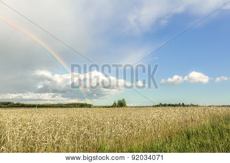 Farmland Summer Landscape With Rainbow, Cumulus Clouds And Cereal Field