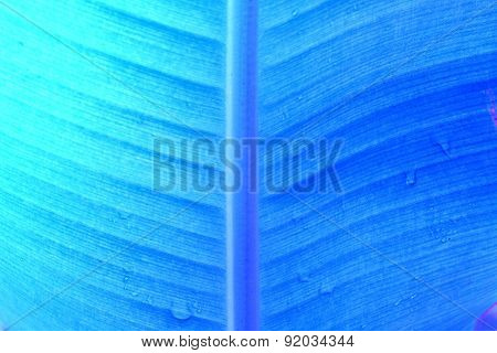 abstract background  of banana leaf texture blur