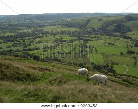 Two English Sheep Grazing With A View Of The Valley, Peak District National Park, Manchester, Englan