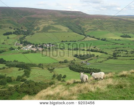 Two English Sheep Overlooking The Valley, Peak District National Park, Manchester, England