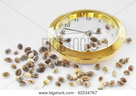 Hemp Seeds And A Golden Clock