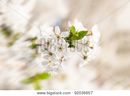 Blossoming Tree Brunch
