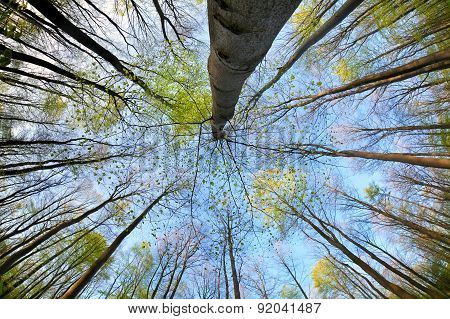 Trees In Forest Over Blue Sky