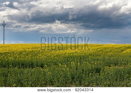 Rape field, cloudy sky