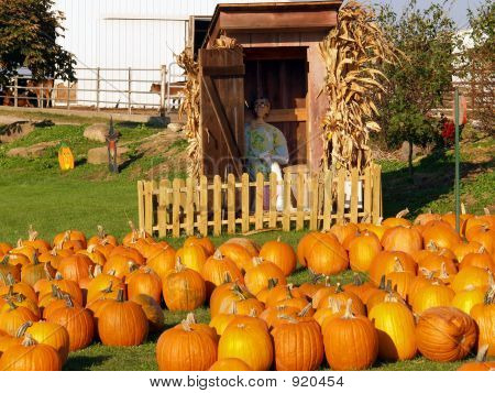 Outhouse And Pumpkins