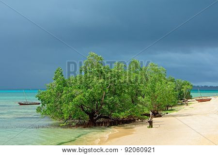 Mangrove trees and rain clouds on the tropical coast of Zanzibar island