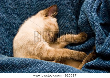Baby Kitten Sleeping