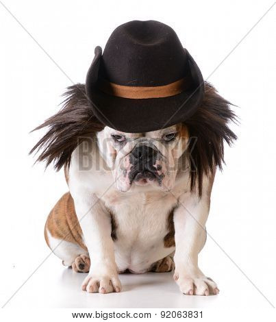 funny dog wearing western hat and wig on white background