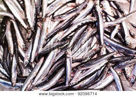 Delicious  Fresh Fish On Ice On The Market. Smelt  Fish On White Iced Background - Healthy Food, Die