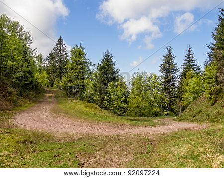 Hairpin Turn In Nature
