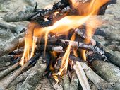 stock photo of bonfire  - camp wooden bonfire burning in the forest - JPG