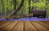 foto of harebell  - Old farm machinery in bluebell flowers in Spring forest landscape with wooden planks floor - JPG
