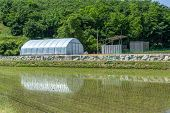 stock photo of house woods  - a small green house in a countryside of korea next to the rice paddies - JPG