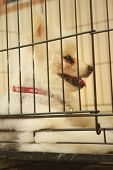 image of caged  - Pomeranian puppy in a cage at the park - JPG