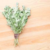 stock photo of oregano  - A bunch of fresh oregano on a light wooden background - JPG