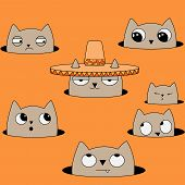 foto of sombrero  - the remaining cats are jealous and hate that cat because he classy sombrero - JPG