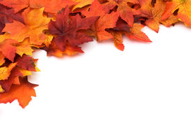 picture of fall leaves  - Fall leaves for an autumn background with copy space - JPG