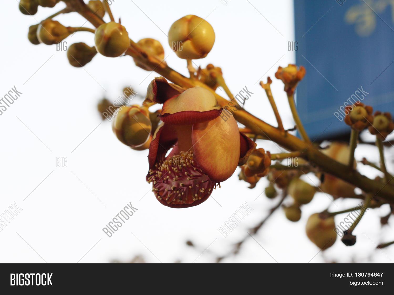 Sal Most Beautiful Flowers Ever Image Photo Bigstock