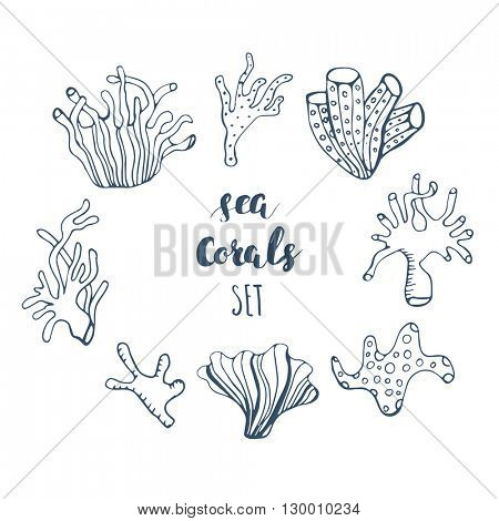 Set of hand drawn underwater coral reef elements. Vector  design  for your sea life illustration. Blue corals on white background