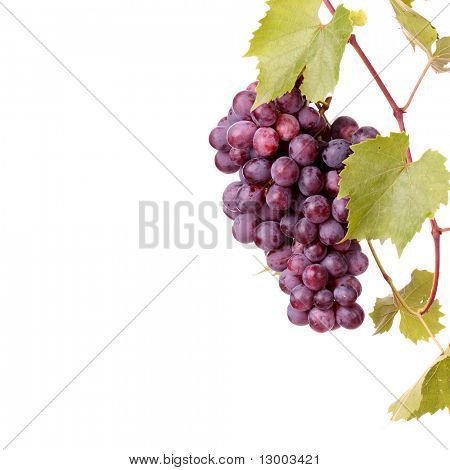 Red grape cluster with leaves isolated