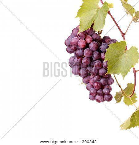 Rote Trauben Cluster mit Blättern, die isoliert