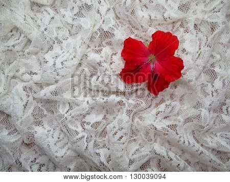 red flower lies on a white lace, lace laid in the crease