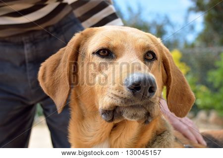 closeup of a dog is stroking by his owner at the park