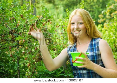 Girl Picking Gooseberry