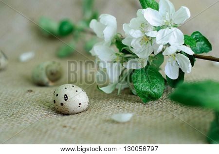 quail egg on the cloth sack next to a blossoming branch of Apple