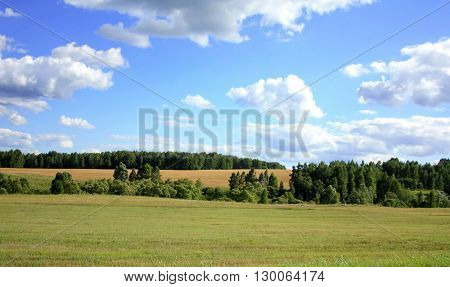 Beautiful manicured fields with strips of forests on the background of clear blue sky