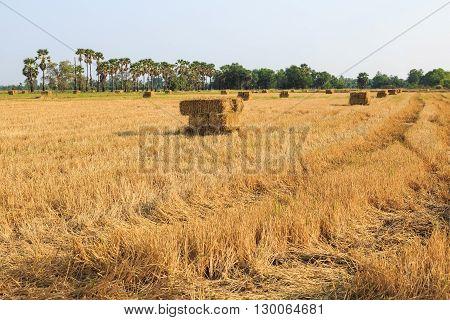 Rice Straw Bale