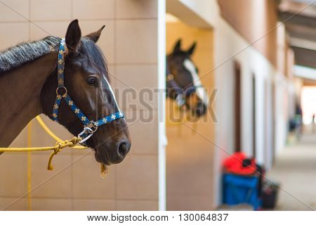 Horses in the Stable Boxes. Horses Stud Farm Theme.