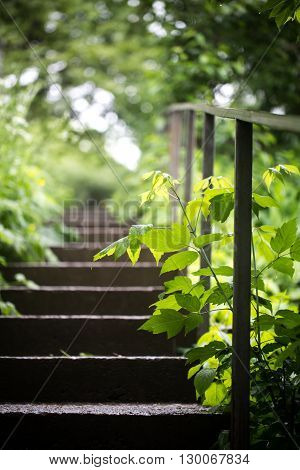 the old concrete stairs in the green groves