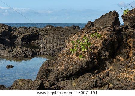 Lava Tide Pool