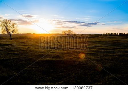 Field tree and blue sky. Summer or spring landscape.
