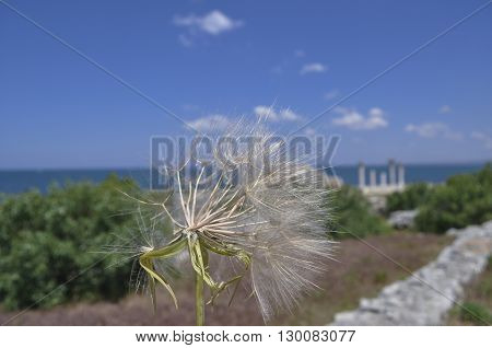 Wind blows away dandelion on blurred background of sky and sea