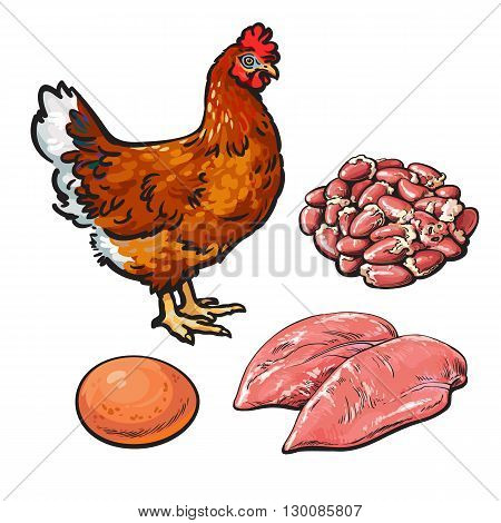 Chicken meat with egg and hearts, vector illustration sketch isolated on white background, sketch chicken products for food, chicken hearts and egg fillets, fresh produce, meat, poultry and egg